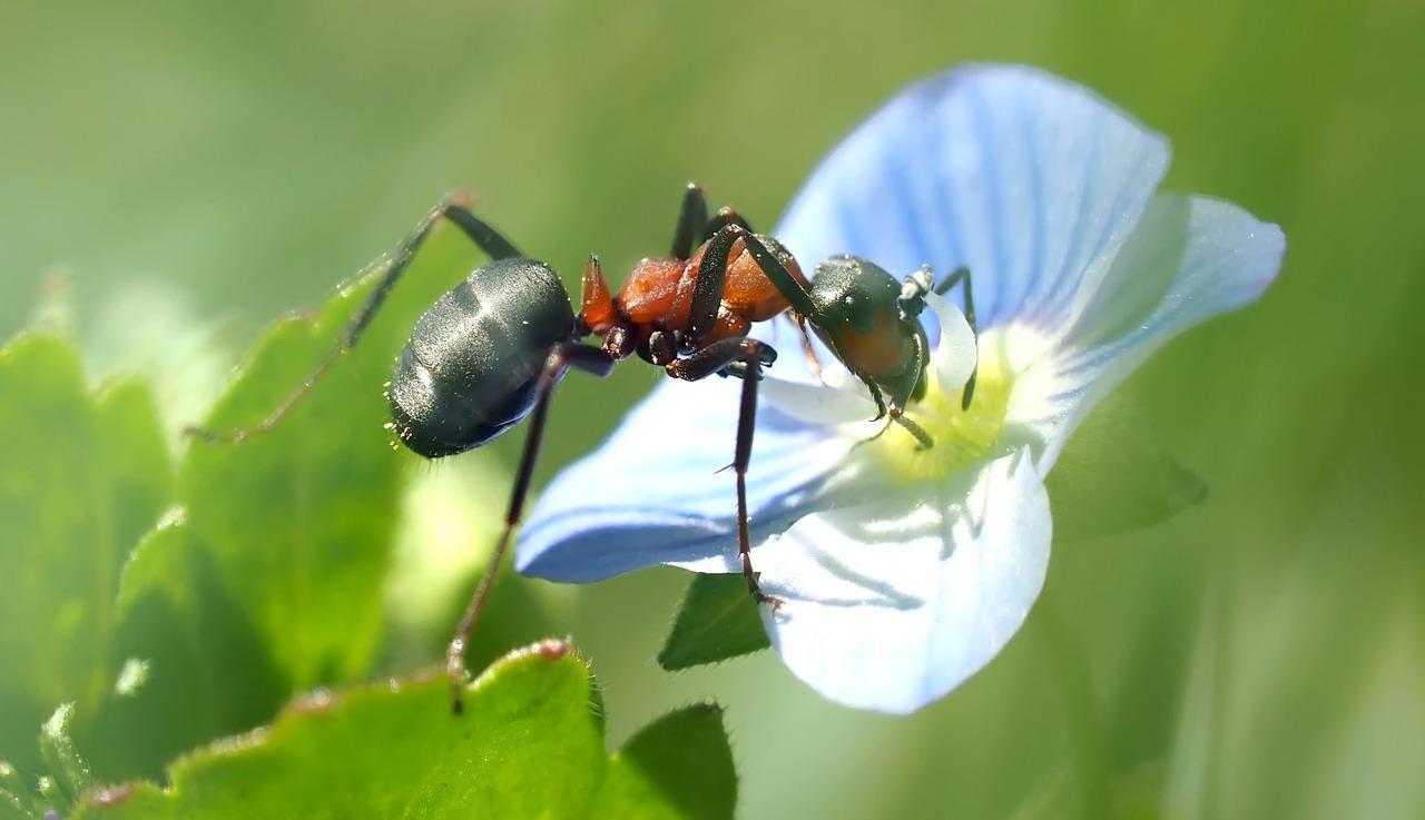 Фото муравья крупным планом