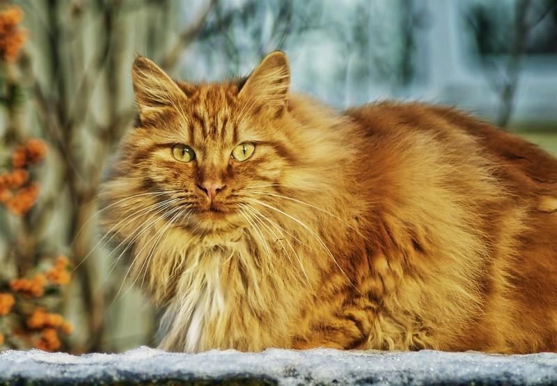 Как кошки огурцов боятся
