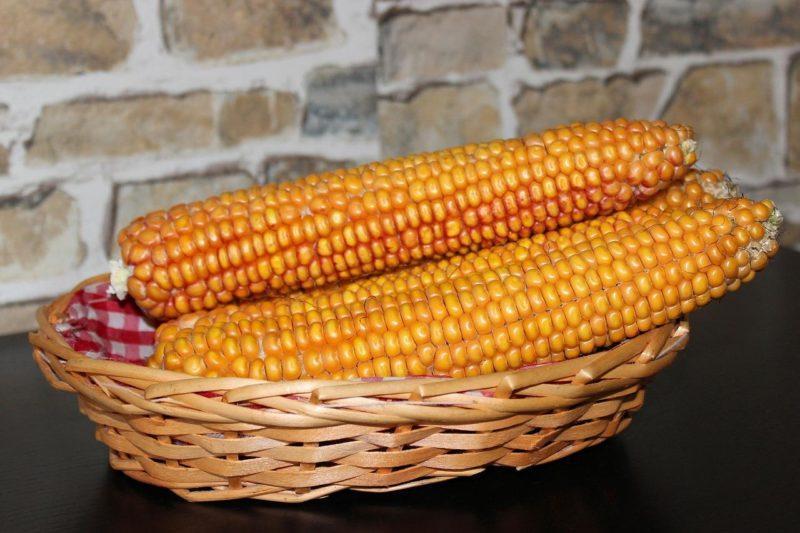 Как законсервировать кукурузу дома