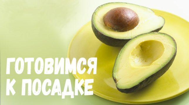 Авокадо на блюде