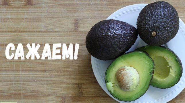 Два авокадо