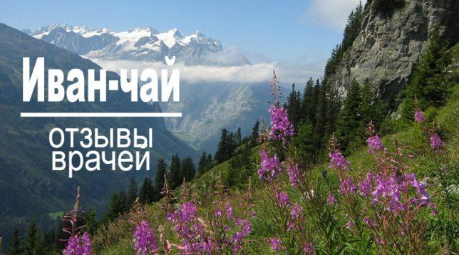 Иван-чай на склоне горы Отзывы врачей