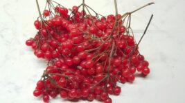 Как использовать ягоды калины