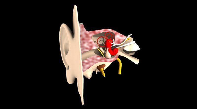 Строение ушного канала человека