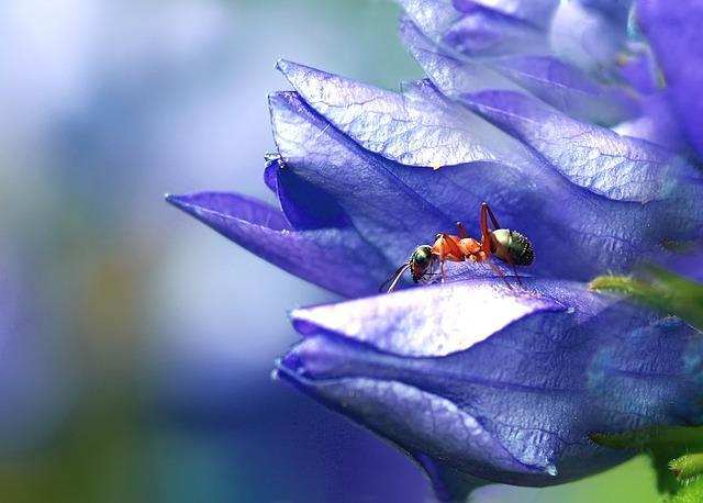 Фото муравья в цветке