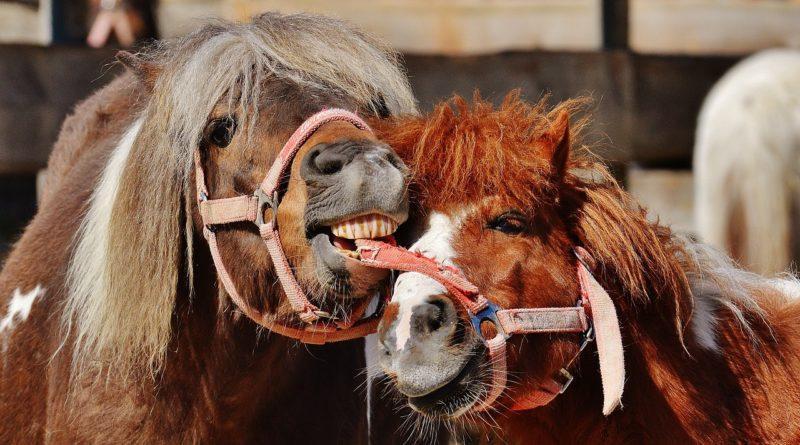 Фото веселых и добрых лошадей