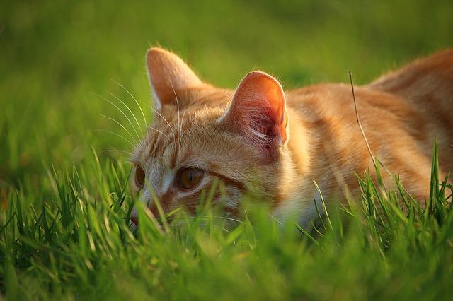 Кото сидит в траве