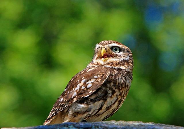 Красивое фото совы