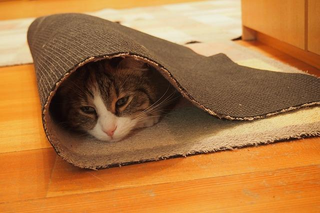 Фото кота в ковре