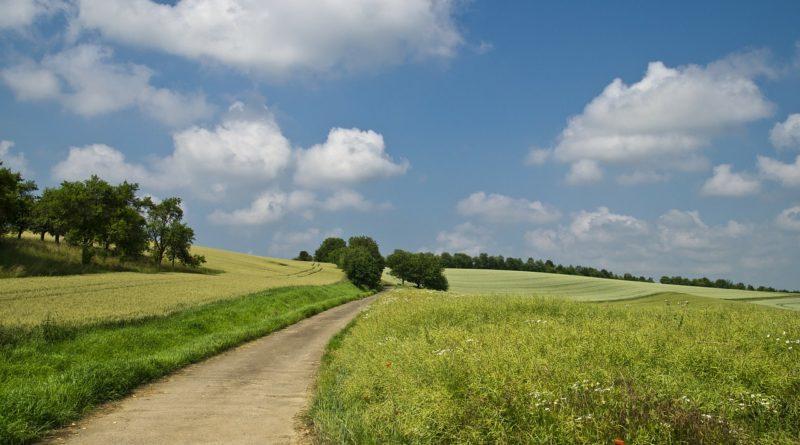 Ление поля