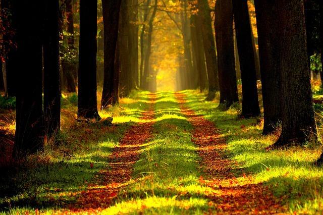 Красивый лесной пейзаж