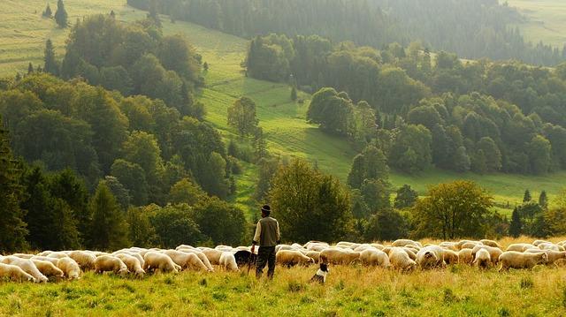 Красивая сельская местность