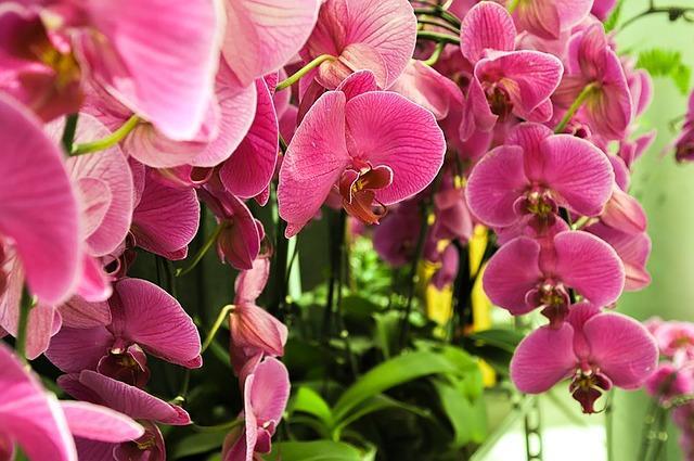 Мелкие цветы у фаленопсиса