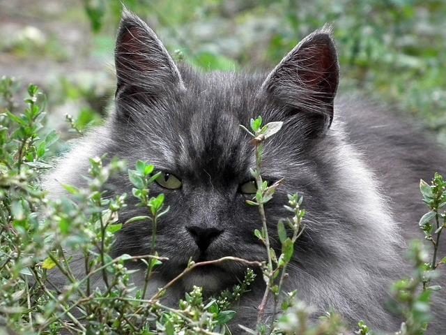 Красивый серый кот