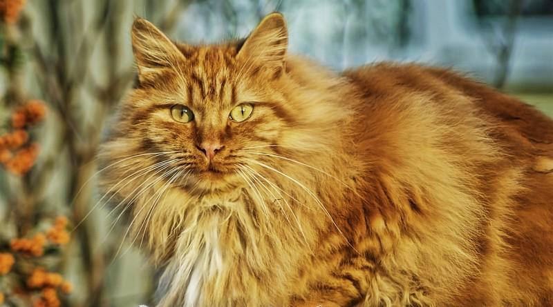 Почему коты и кошки бояться огурцов