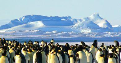 Где живут белые медведи и пингвины