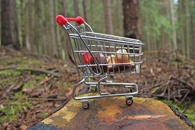 Красивое фото корзинки с грибами