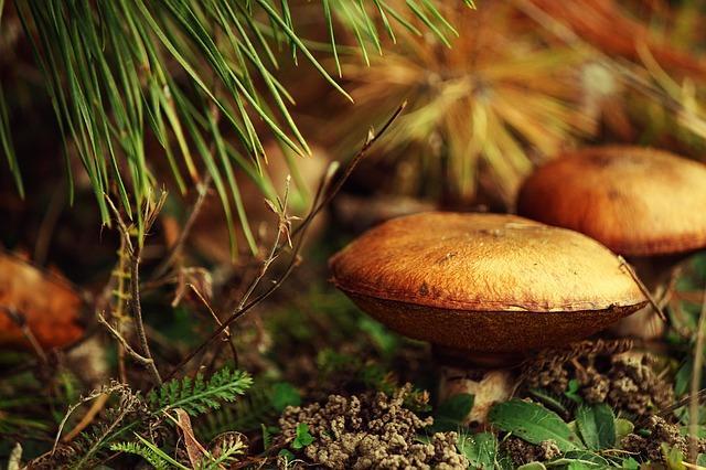 Фото маслят в лесу