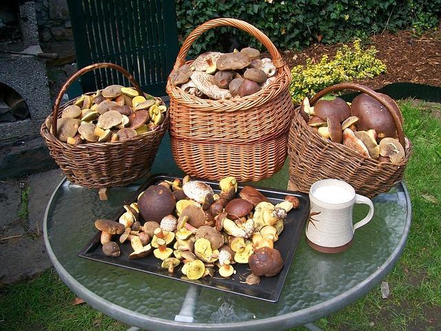 Большие корзины с разными грибами