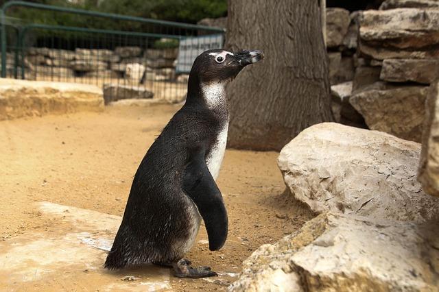 Фото пингвина в зоопарке