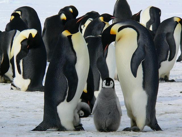 Семейство пингвинов с потомством