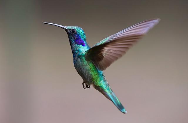 Фото колибри в полете