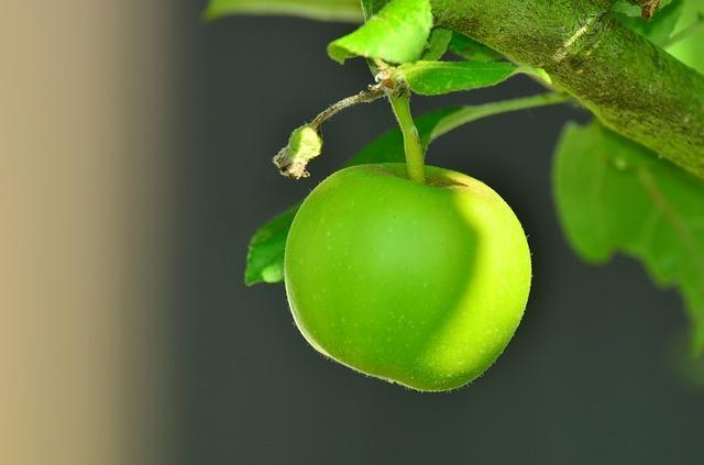 Фото яблок сорта Снежный Кальвиль