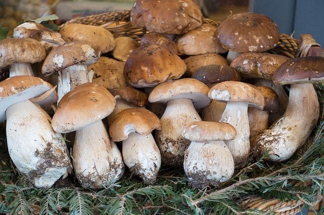 Фото белых грибов на рынке