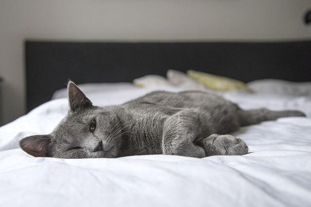 Кот на матрасе