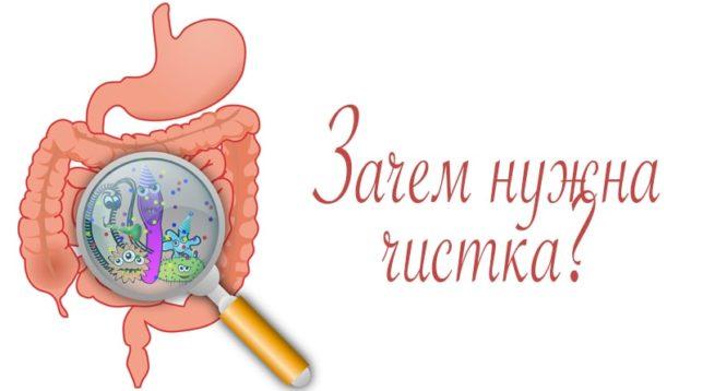 почистить организм от паразитов в домашних