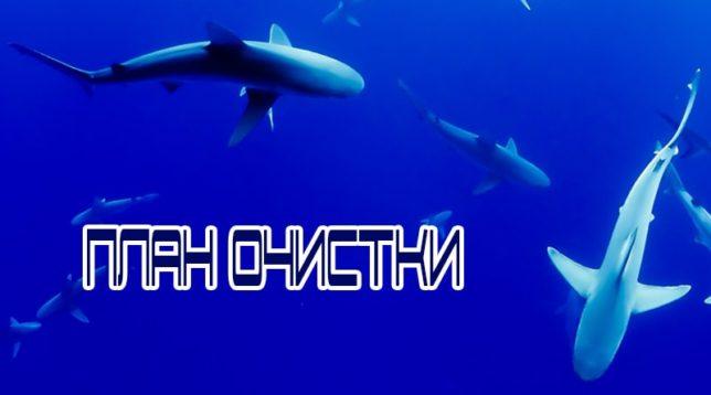 Акулы в воде