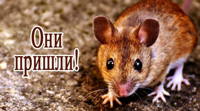 Мышь смотрит в кадр